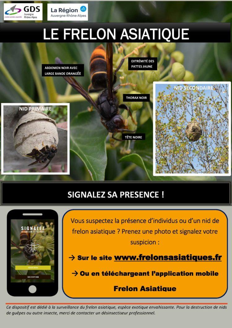Frelon asiatique et recherche de nids